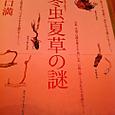 冬虫夏草(とうちゅうかそう)