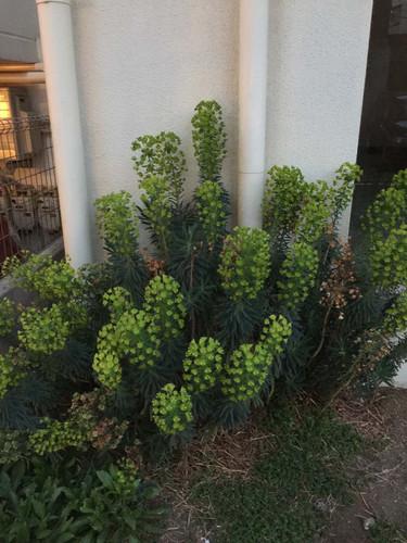 この植物の名前わかる方いましたら教えて下さい。